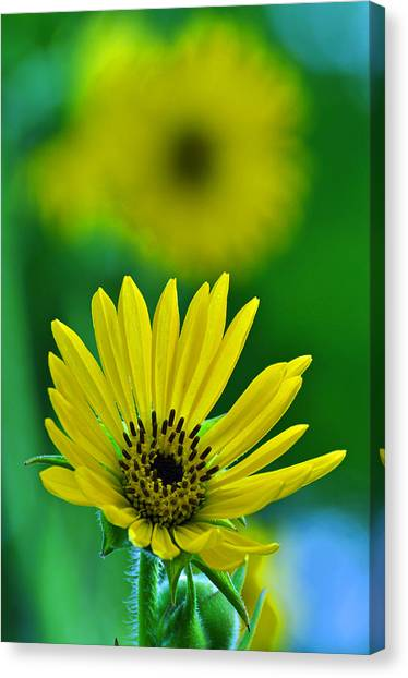 Yellow And Green 3 Canvas Print by Peter  McIntosh