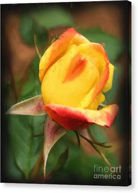 Yellow And Orange Rosebud Canvas Print