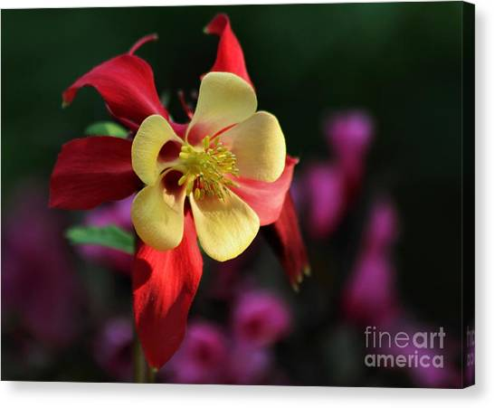 Yellow And Red Columbine Canvas Print