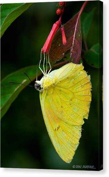 Canvas Print - Yellow And Red by Don Durfee