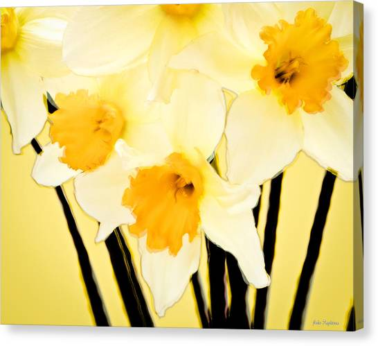 Yellow And White Daffodils. Canvas Print