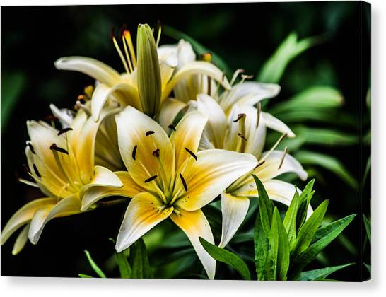 Yellow And White Lilys Canvas Print