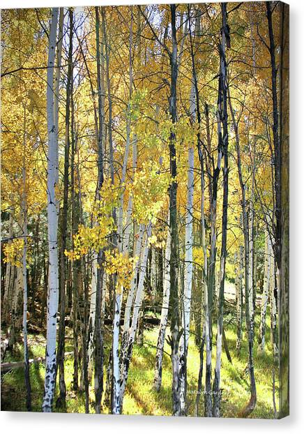 Yellow Aspens Canvas Print