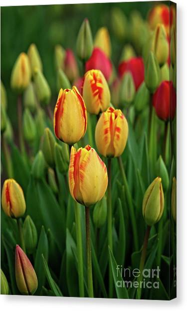 Canvas Print featuring the photograph Yellow Beauties by Craig Leaper