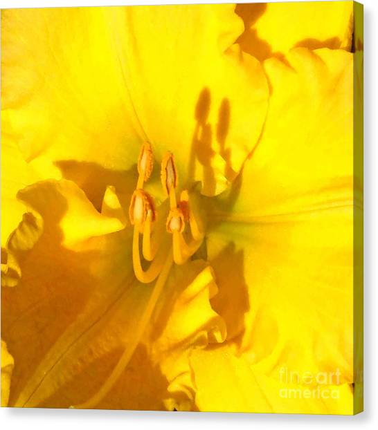 Yellow Beauty Canvas Print by Tierong Fu