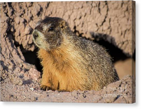 Groundhogs Canvas Print - Yellow-bellied Marmot - Capitol Reef National Park by Gary Whitton
