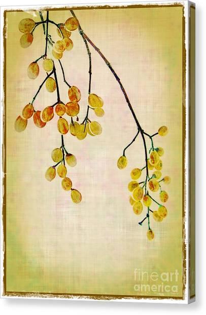 Yellow Berries Canvas Print