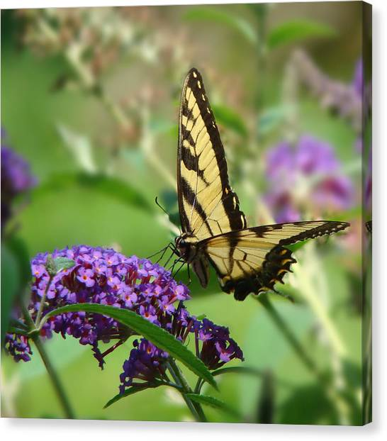 Yellow Butterfly On Purple Canvas Print