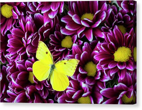 Pom-pom Canvas Print - Yellow Butterfly On Purple Poms by Garry Gay