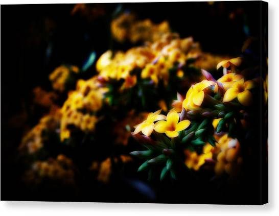 Yellow Canvas Print by Cabral Stock