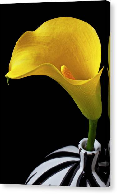 Floral Canvas Print - Yellow Calla Lily In Black And White Vase by Garry Gay