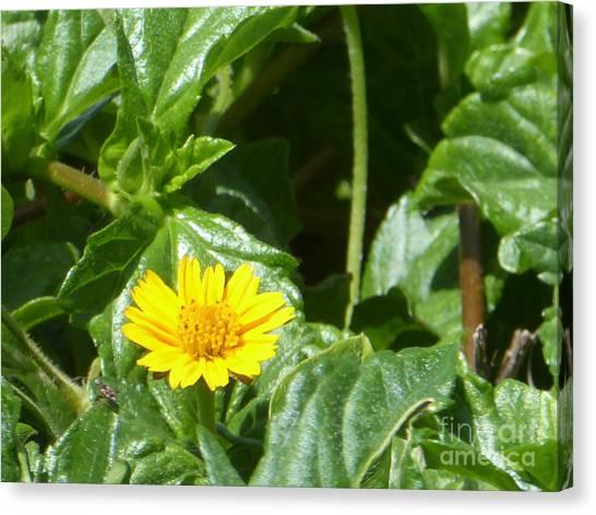 Yellow Caribbean Flower Canvas Print