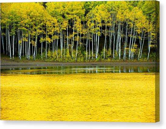 Wilderness Canvas Print - Yellow by Chad Dutson