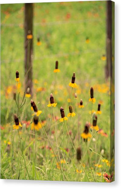 Yellow Cone Flower Canvas Print