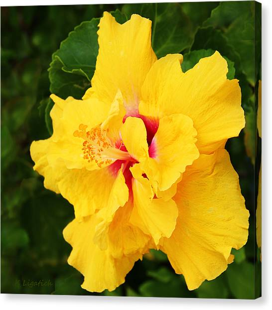 Hibiscus Canvas Print - Yellow Double Hibiscus by Kerri Ligatich