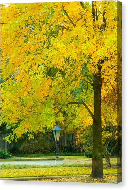 Yellow Drapes Canvas Print