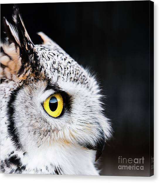 Yellow Eye Canvas Print