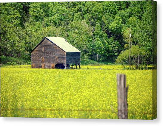 Yellow Field Rustic Shed Canvas Print