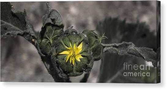 Yellow Flower 3 Canvas Print