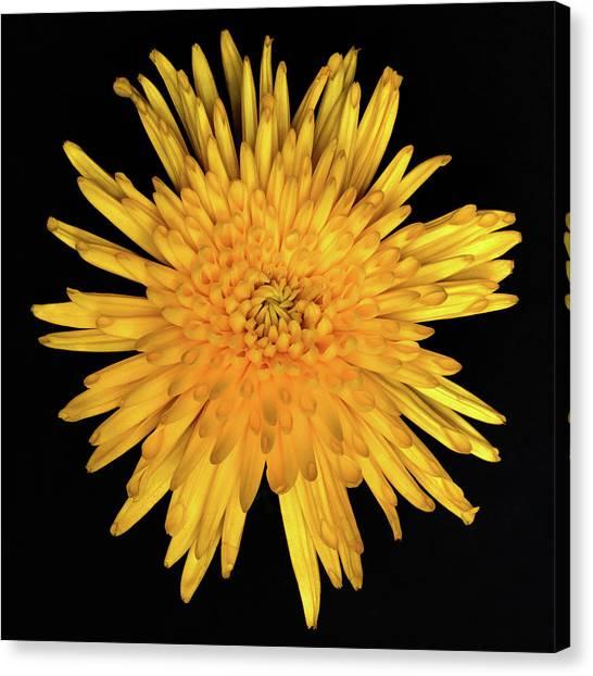 Yellow Flower Macro Canvas Print