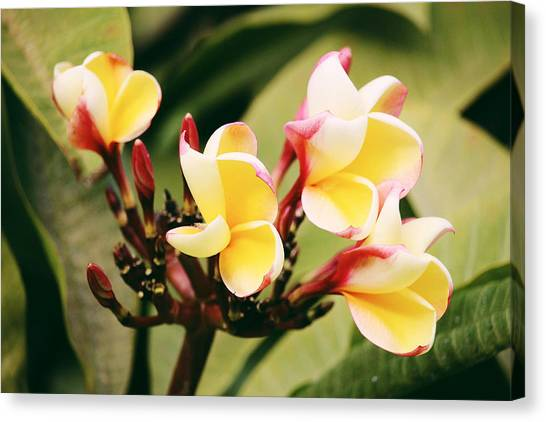 Canvas Print featuring the photograph Yellow Flower by Martina Uras