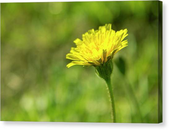 Canvas Print featuring the photograph Yellow Flower by Nikos Stavrakas