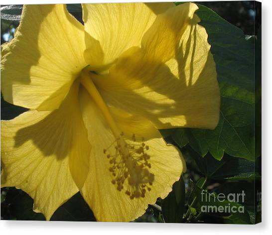 Yellow Flower Canvas Print by Paula Deutz