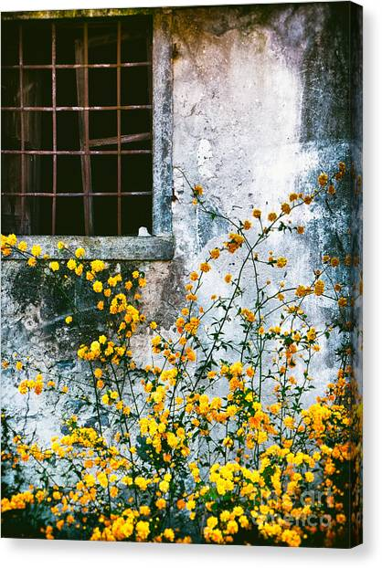 Yellow Flowers And Window Canvas Print