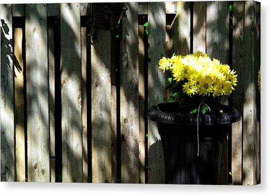Yellow Flowers In A Black Flower Pot 2wc2 Canvas Print