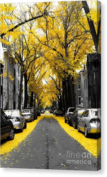 District Of Columbia Canvas Print - Yellow Gingko Trees In Washington Dc by Paul Frederiksen