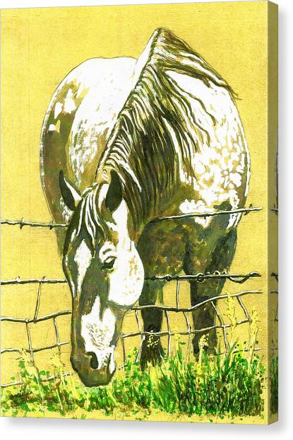 Yellow Horse Canvas Print