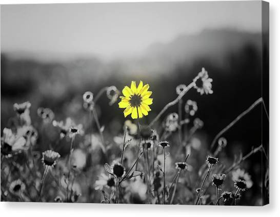 Yellow Is The Color Canvas Print