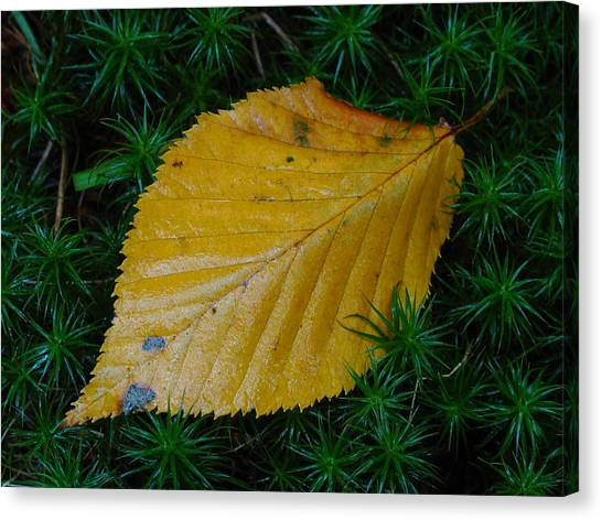 Yellow Leaf Canvas Print by Juergen Roth