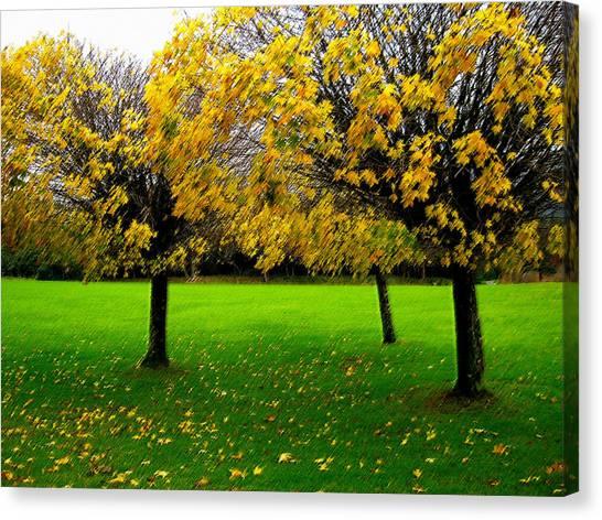 Yellow Leaves At Muckross Gardens Killarney Canvas Print
