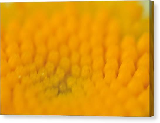 Yellow Canvas Print by Leonard Voicu