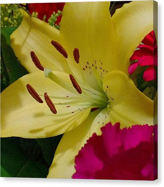 Lilies Canvas Print - #yellow #lily Detail. Love The Pollen by Shari Warren