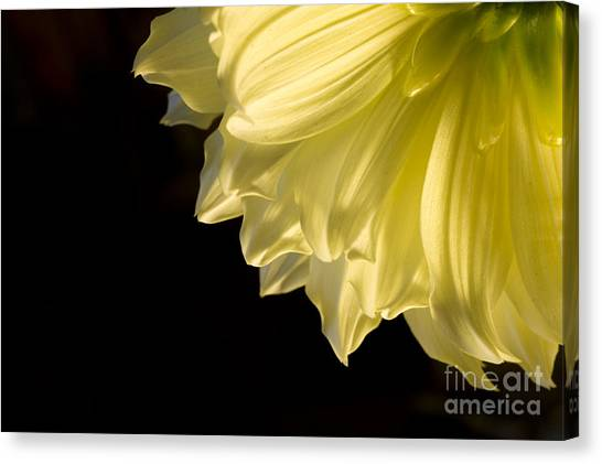 Yellow On Black Canvas Print by Ronald Hoggard