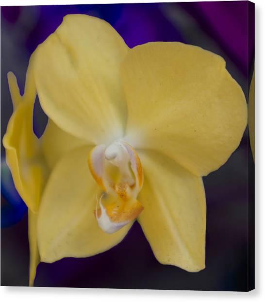 Yellow Orchard Canvas Print