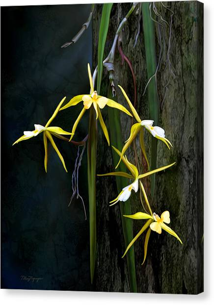 Yellow Orchid Canvas Print