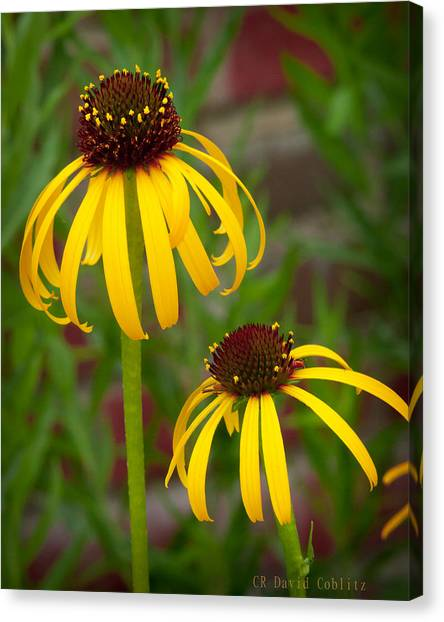 Canvas Print featuring the photograph Yellow Pair by David Coblitz