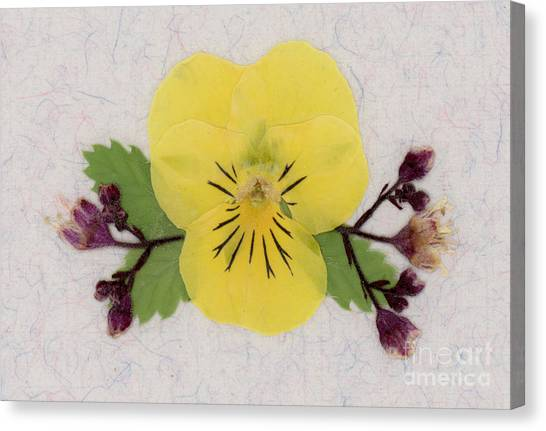 Yellow Pansy And Coral Bells Pressed Flowers Canvas Print