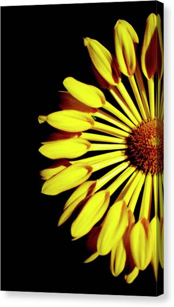 Yellow Petals Canvas Print