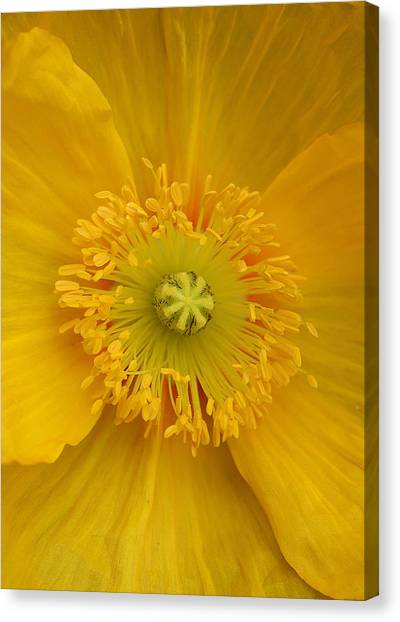 Yellow Poppy Flower Center Canvas Print