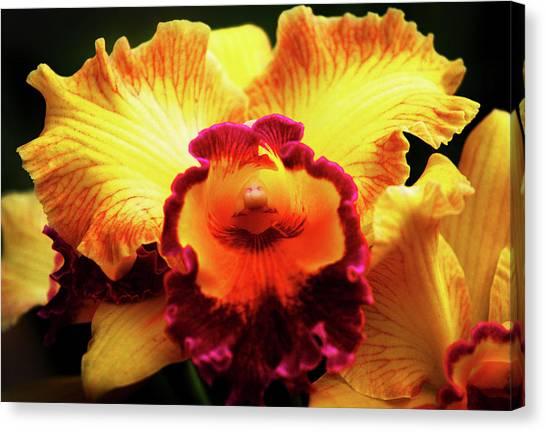 Yellow-purple Orchid Canvas Print