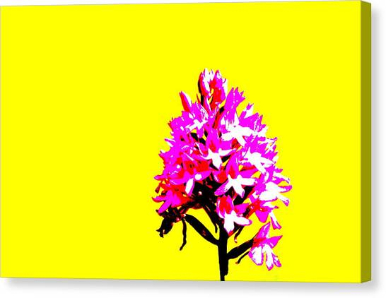 Yellow Pyramid Orchid Canvas Print