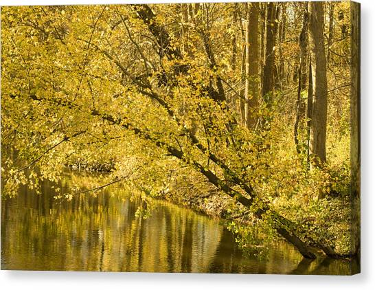 Yellow River Canvas Print by Ryan  Krueger