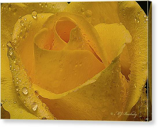 Yellow Rose And Dew Canvas Print by Marti Buckely