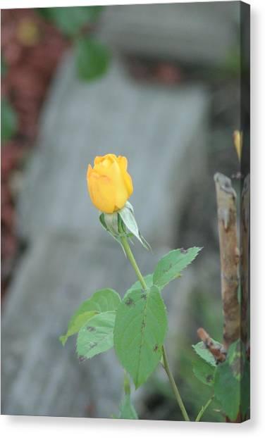 Yellow Rose Bud Canvas Print by ShadowWalker RavenEyes Dibler