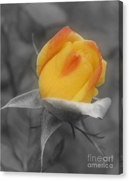 Yellow Rosebud Partial Color Canvas Print