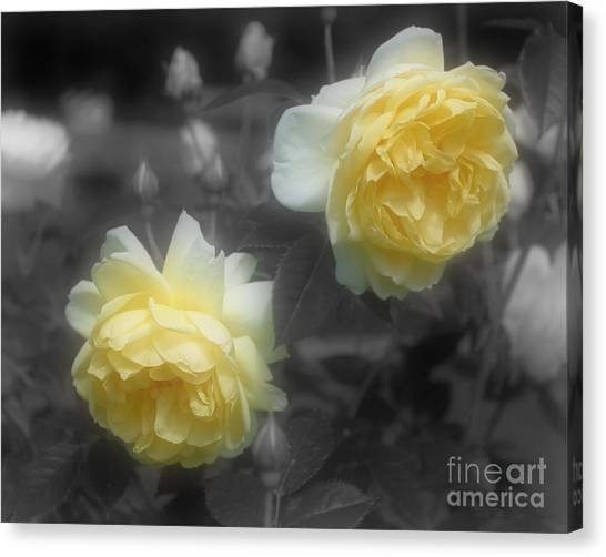 Yellow Roses Partial Color Canvas Print